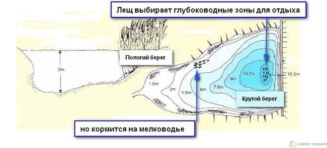 Схема расположения леща в водоеме