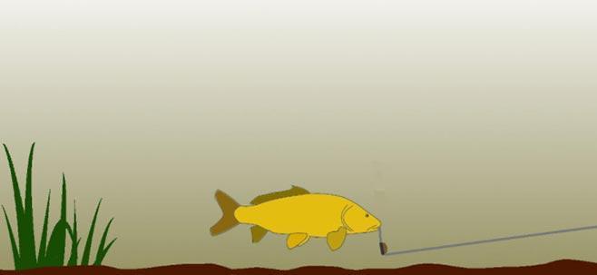 Засечка рыбы