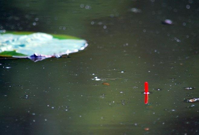 Правильная огрузка поплавка, виден кончик антенки