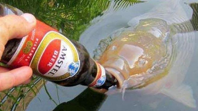 Карп и пиво