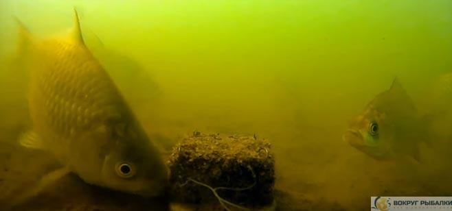 макушатник- подводные съемки