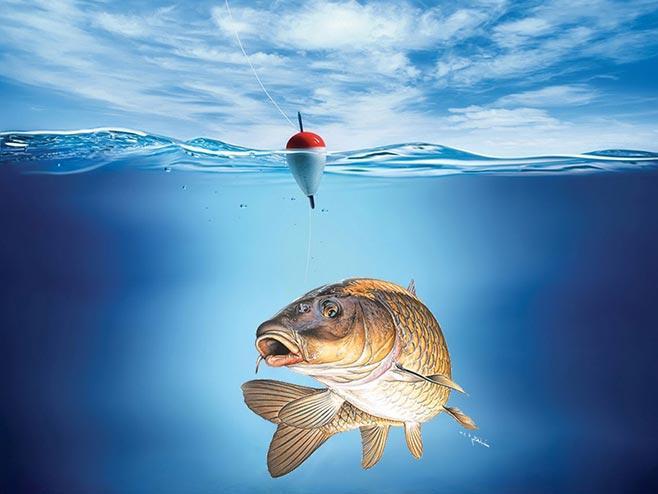 рыба и поплавок