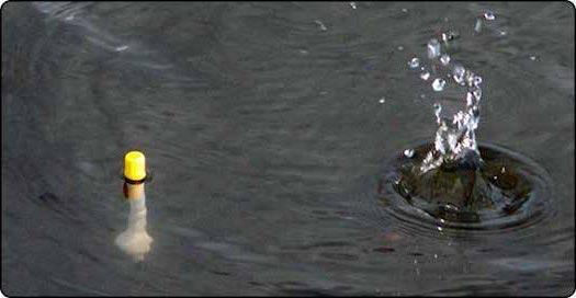 прикармлевание места возле поплавка