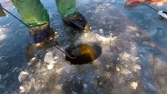 подбагривание рыбы в лунке